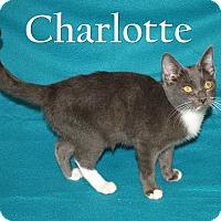 Adopt A Pet :: Charlotte - Jackson, MS