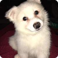 Adopt A Pet :: Aspen - Fairview Heights, IL