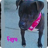 Adopt A Pet :: Faye - Princeton, KY