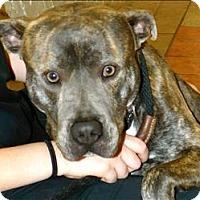 Adopt A Pet :: Blunder - Birmingham, AL