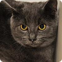 Adopt A Pet :: Lynx - Alpharetta, GA
