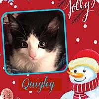 Adopt A Pet :: Quigley - Enid, OK