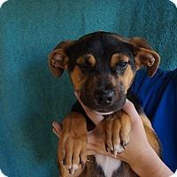 Adopt A Pet :: Penn - Oviedo, FL