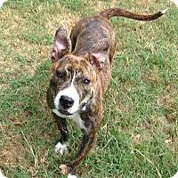 Adopt A Pet :: Demi - Trenton, NJ
