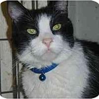 Adopt A Pet :: Boom Boom - Pasadena, CA