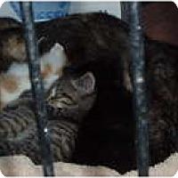 Adopt A Pet :: Lulu - Westfield, MA