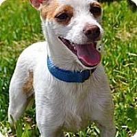 Adopt A Pet :: Dylan - Bridgeton, MO