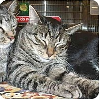 Adopt A Pet :: Morton - Colmar, PA