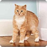 Adopt A Pet :: Carlisle - Owensboro, KY