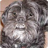 Adopt A Pet :: Haley - Mays Landing, NJ