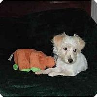 Adopt A Pet :: Meg - Mooy, AL