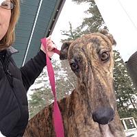 Adopt A Pet :: Tina - Swanzey, NH