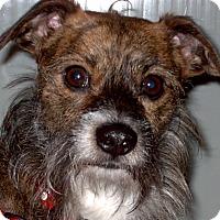 Adopt A Pet :: Seth (Doggins) 2015 (m/c) - Chesterfield, MI