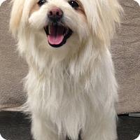 Adopt A Pet :: Earwen - Pleasant Plain, OH