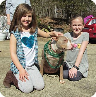 American Pit Bull Terrier Mix Dog for adoption in Toms River, New Jersey - Mimi