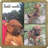 Adopt A Pet :: Todd in CT - Manchester, CT