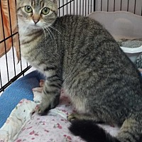 Adopt A Pet :: Monkey - Jefferson, TX