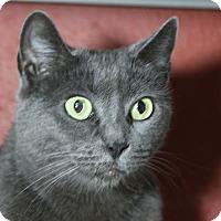 Adopt A Pet :: Char - Sarasota, FL