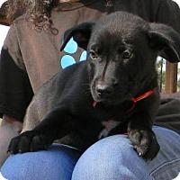 Adopt A Pet :: Spam - Montgomery, AL