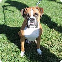Adopt A Pet :: Pinot - Alameda, CA