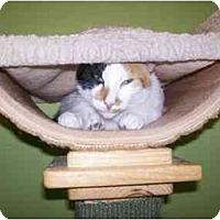 Adopt A Pet :: Cali - Marietta, GA