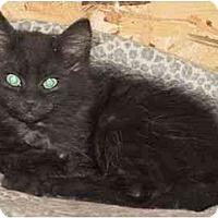 Adopt A Pet :: Whiskey - Strathmore, AB