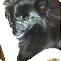 Adopt A Pet :: BELLA - Glenpool, OK