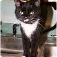 Adopt A Pet :: Jamie - Lake Ronkonkoma, NY