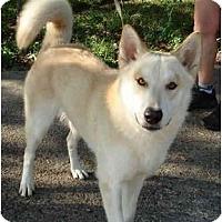 Adopt A Pet :: Arctic - Kingwood, TX