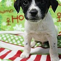 Adopt A Pet :: Gambit - Wytheville, VA