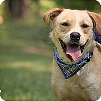 Adopt A Pet :: Chip - Thomaston, GA