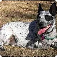 Adopt A Pet :: Poehler - Phoenix, AZ
