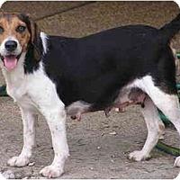 Adopt A Pet :: (Mamma) Mia - Prairieville, LA