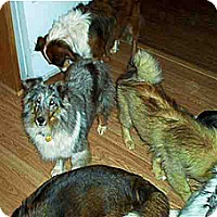 Adopt A Pet :: Lily - Alderson, WV