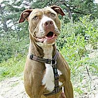 Adopt A Pet :: Destiny - Forked River, NJ