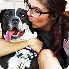 Adopt A Pet :: Allie