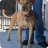 Adopt A Pet :: Clarice - Dublin, VA