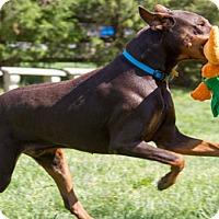 Adopt A Pet :: TEAGON - Greensboro, NC