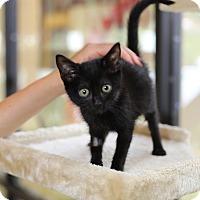 Adopt A Pet :: Kalix - Mission Viejo, CA