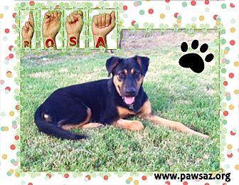 German Shepherd Dog Mix Puppy for adoption in Higley, Arizona - ROSA