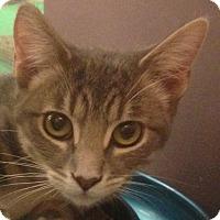 Adopt A Pet :: Sage - Winchester, CA