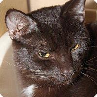 Adopt A Pet :: Java @ Petsmart Roswell - McDonough, GA