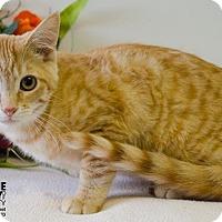 Adopt A Pet :: LUCAS - Sandusky, OH