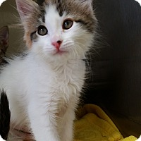 Adopt A Pet :: Velma - Chula Vista, CA