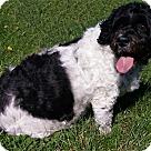 Adopt A Pet :: Gretta