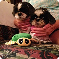 Adopt A Pet :: Dixie & Rosie - LEXINGTON, KY