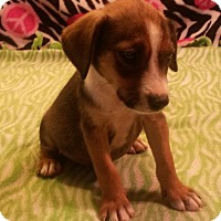 Adopt A Pet :: Barkley - Leming, TX
