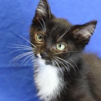 Adopt A Pet :: Page - Winston-Salem, NC