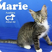 Adopt A Pet :: Marie - Carencro, LA