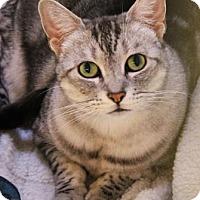 Adopt A Pet :: Sophie - Encinitas, CA